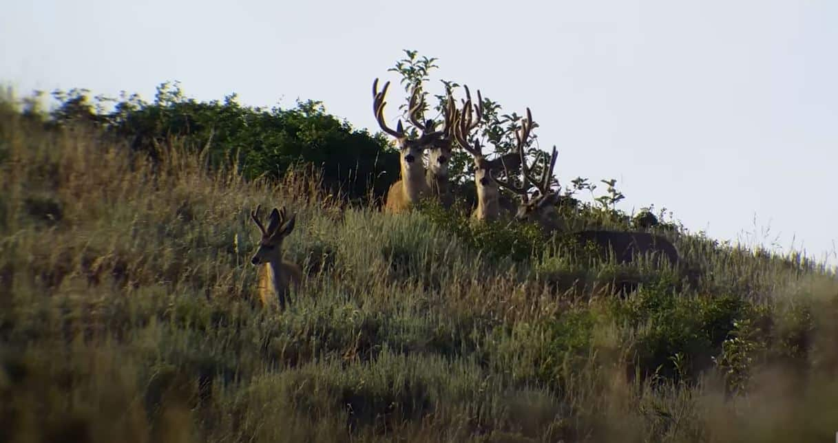 how to search deer successfully deer pursuing tips