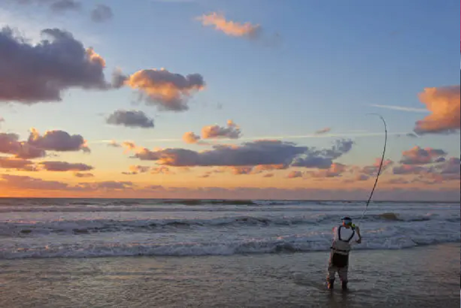 best time to surf fish