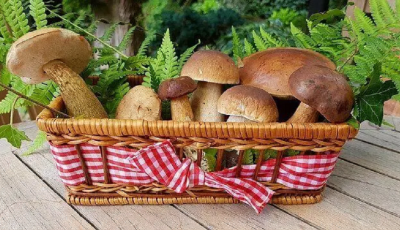what mushrooms are edible