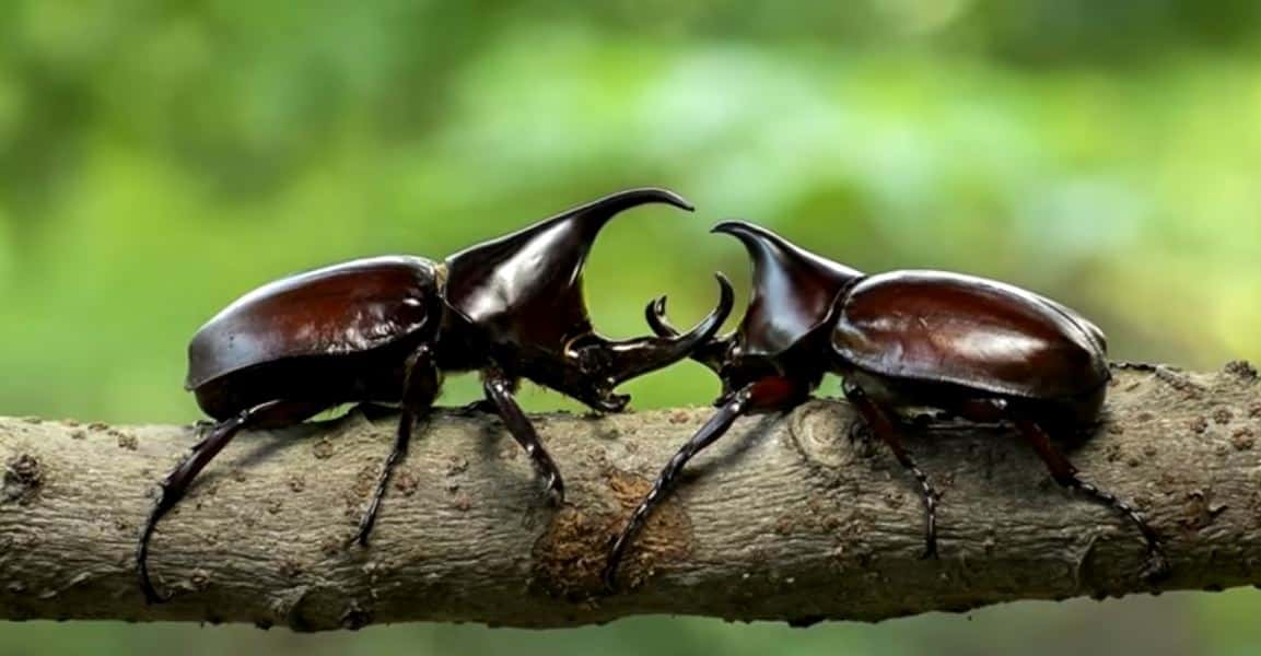 dangerous insects in the amazon rainforest